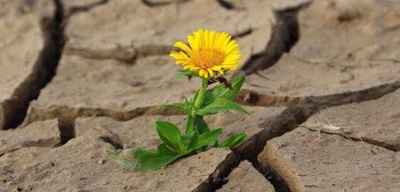 Sei Resiliente?